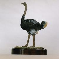 Ostrich (pair) Odd & Unusual